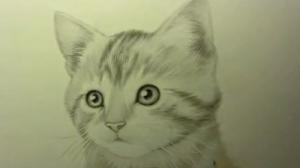 kedi-resmi-cizme