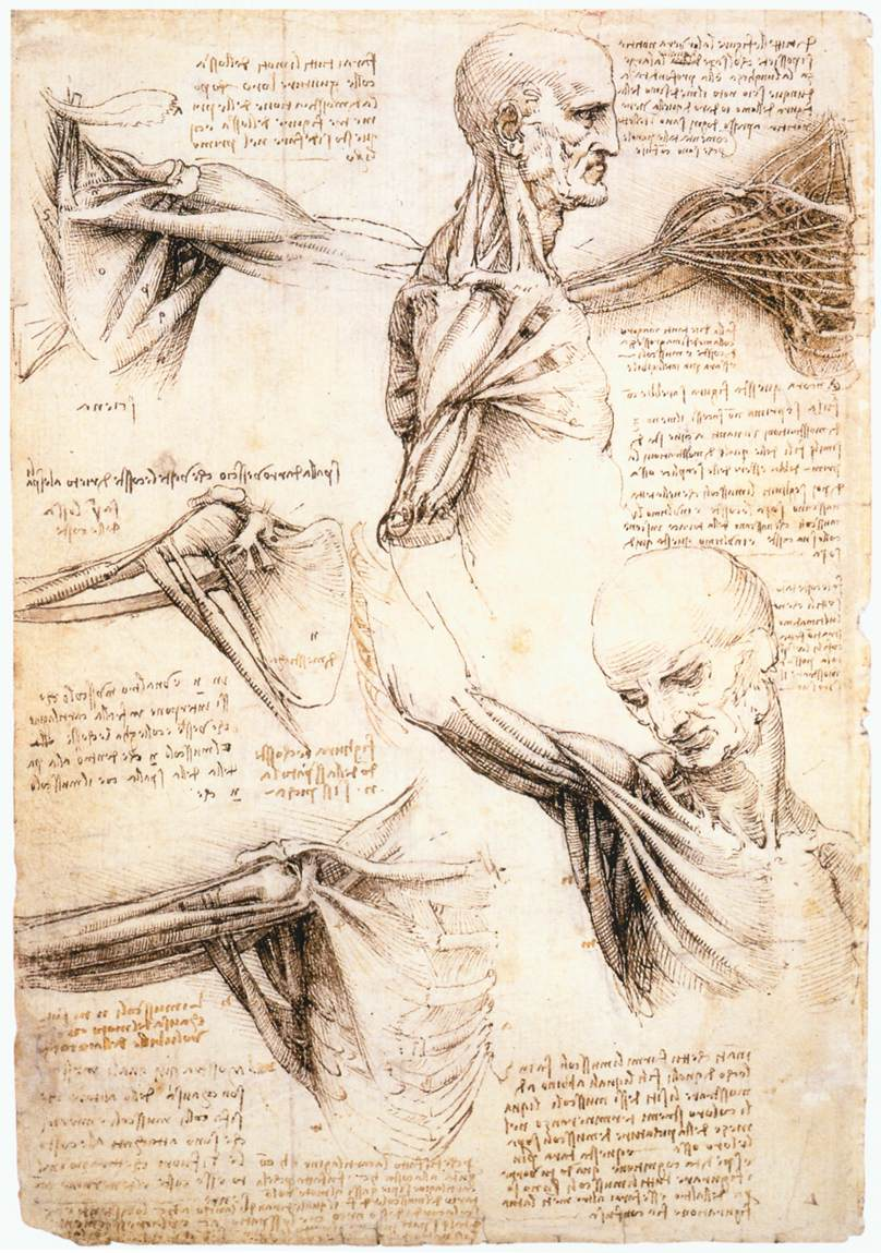 Leonardo_da_Vinci_Anatomical_studies_of_the_shoulder