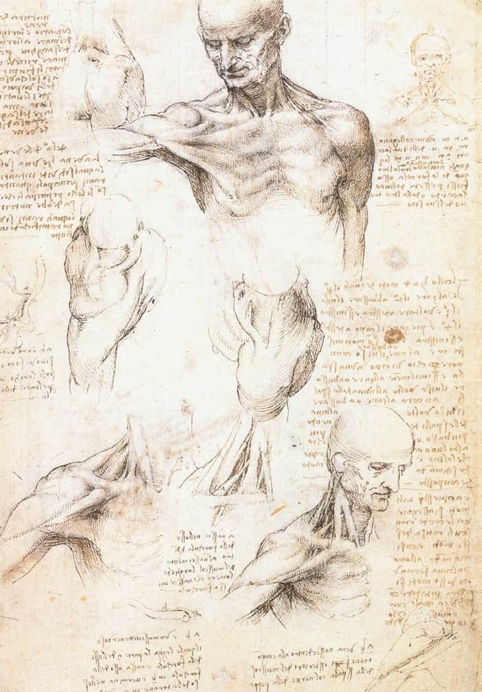 Leonardo_da_Vinci_Anatomical_studies_of_the_shoulder_1509_10